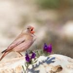 aves-migratorias-min