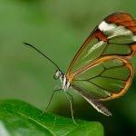 mariposas-02-min